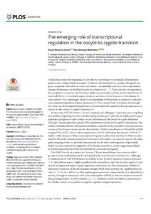 The emerging role of transcriptional regulation in the oocyte-to-zygote transition